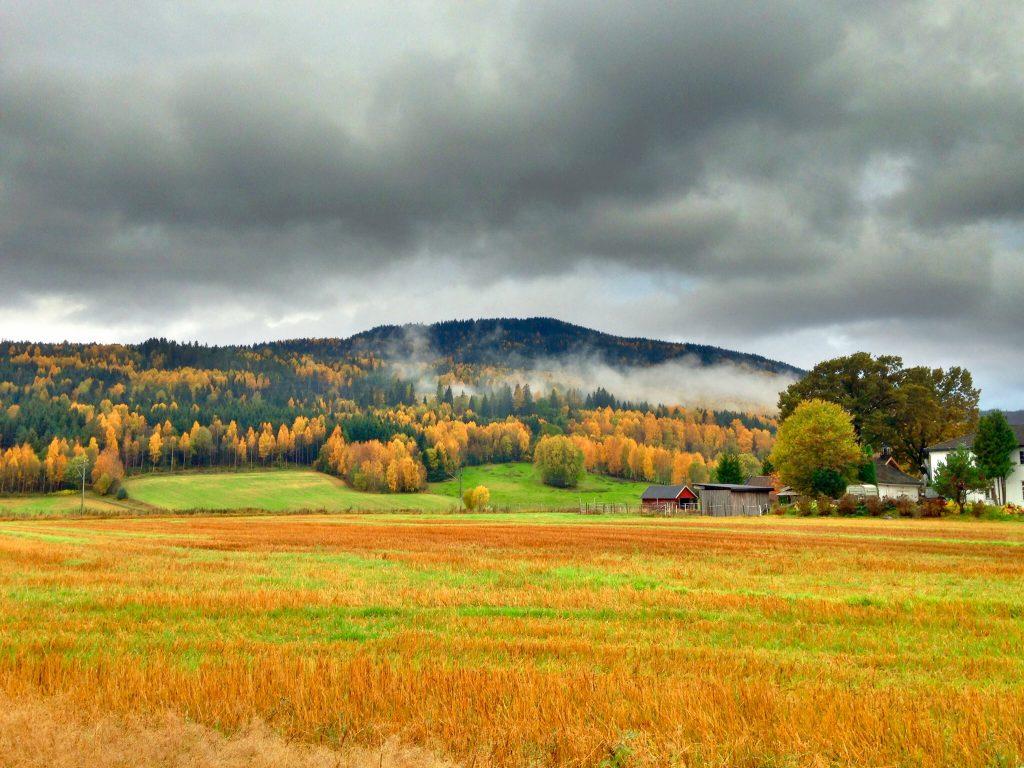 Høst i Drammen
